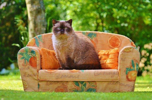 velká kočka na gauči
