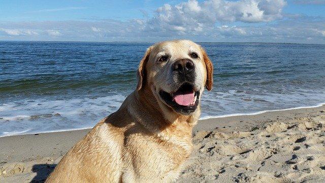 pes na dovolené u moře