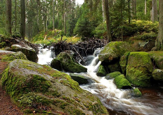 řeka na Šumavě