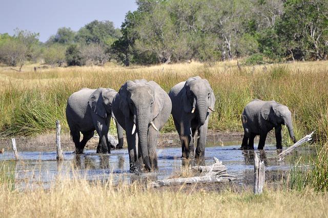 sloni ve vodě