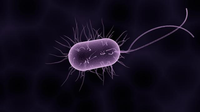 velká bakterie