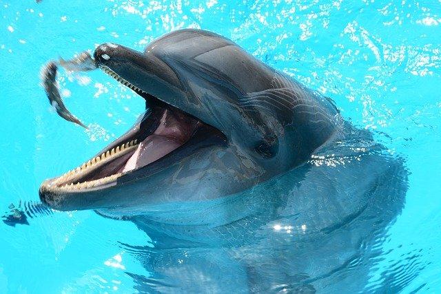 krmení delfína