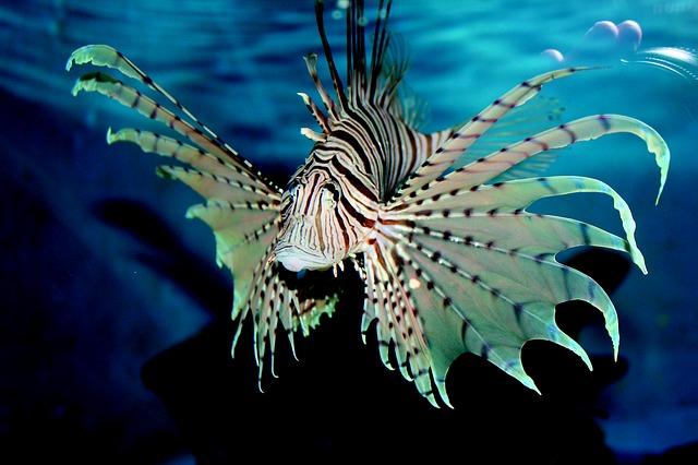 mořská ryba