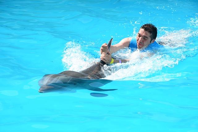 plavání s delfínem