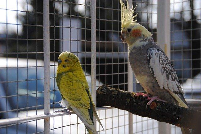 Vzácní kamarádi ptáčci
