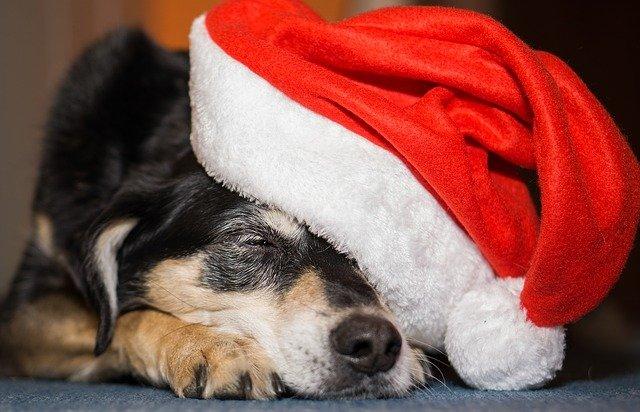 Jak připravit Váš domov na Vánoce
