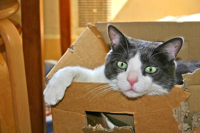kocour v papírové krabici.jpg